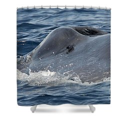 Blue Whale Head Shower Curtain