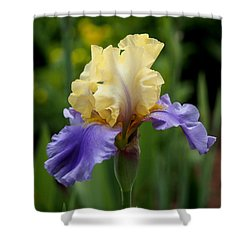 Blue Yellow Iris Germanica Shower Curtain by Rona Black