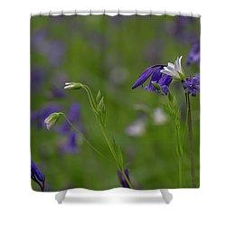 Bluebells And Stitchwort  Shower Curtain
