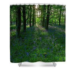 Bluebells In Oxey Woods Shower Curtain