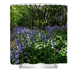 Bluebells3 Shower Curtain