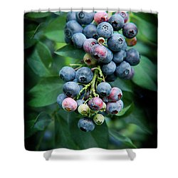 Blueberry Cluster Shower Curtain by Kim Henderson