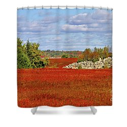 Shower Curtain featuring the photograph Blueberry Field by Debbie Stahre