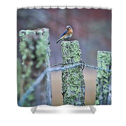 Shower Curtain featuring the photograph Bluebird 040517 by Douglas Stucky