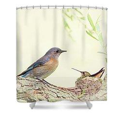 Bluebird And Baby Hummer Shower Curtain