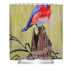 Bluebird And Daisies Shower Curtain