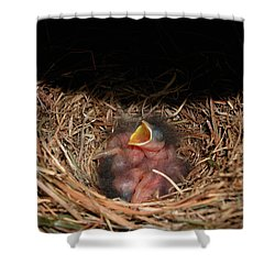 Shower Curtain featuring the photograph Bluebird Babies by Marie Hicks