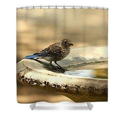 Shower Curtain featuring the photograph Bluebird Bath Time by Sheila Brown
