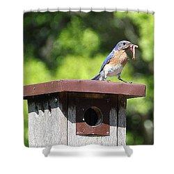 Bluebird Breakfast Feeding Shower Curtain