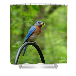 Bluebird Catches Worm Shower Curtain