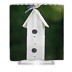 Bluebird Dad Shower Curtain by Judy Johnson