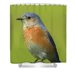 Bluebird Digital Art Shower Curtain