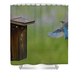 Bluebird Feeding Time Shower Curtain
