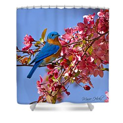 Bluebird In Apple Blossoms Shower Curtain by Marie Hicks