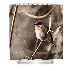 Bluebird In Beige Shower Curtain