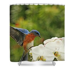 Bluebird Landing On Orchid Shower Curtain