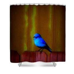 Shower Curtain featuring the photograph Bluebird Of Happiness by Karen Shackles
