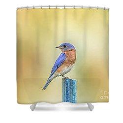 Bluebird On Blue Stick Shower Curtain by Robert Frederick