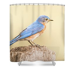 Bluebird On Fence Post Shower Curtain by Robert Frederick