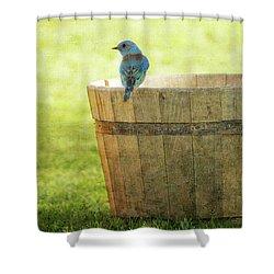 Bluebird Resting On Bucket, Textured Shower Curtain