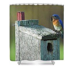 Shower Curtain featuring the photograph Bluebird by Steve Stuller
