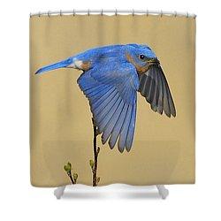 Bluebird Takes Flight Shower Curtain