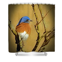 Bluebird Waiting For Spring Shower Curtain