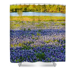 Bluebonnet Field Shower Curtain by Debbie Karnes