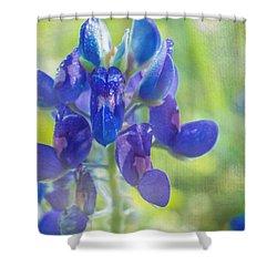 Bluebonnet Of Texas Shower Curtain