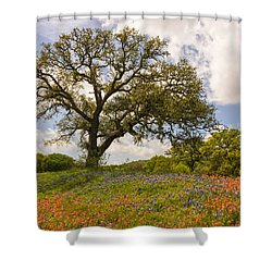 Bluebonnets Paintbrush And An Old Oak Tree - Texas Hill Country Shower Curtain