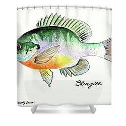 Bluegill Fish Shower Curtain by LeAnne Sowa