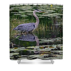 Blue's Image- Great Blue Heron Shower Curtain