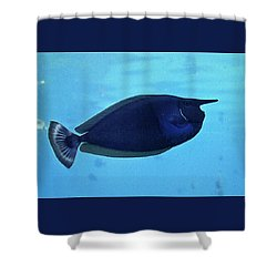 Bluespine Unicorn Fish Shower Curtain