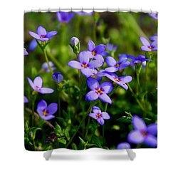 Shower Curtain featuring the photograph Bluets by Kathryn Meyer