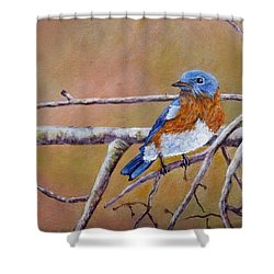 Bluey Shower Curtain