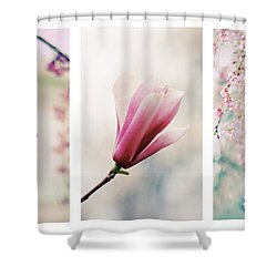 Shower Curtain featuring the photograph Blush Blossom Triptych by Jessica Jenney