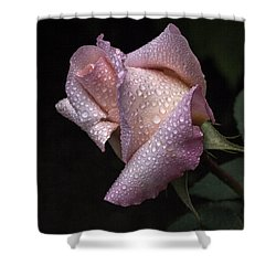 Blush Shower Curtain by Doug Norkum