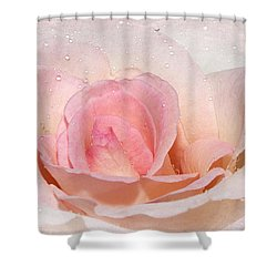 Blush Pink Dewy Rose Shower Curtain by Phyllis Denton