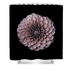 Blushing Dahlia  Shower Curtain