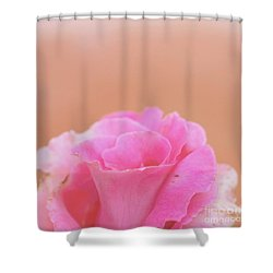 Shower Curtain featuring the photograph Blushing Rose by Cindy Garber Iverson