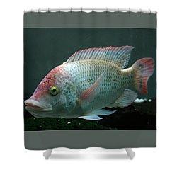 Blushing Tilapia Shower Curtain