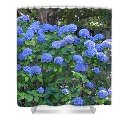 Shower Curtain featuring the photograph Blue Hydrangeas by Mini Arora