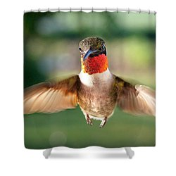 Boastful  Shower Curtain by Bill Pevlor