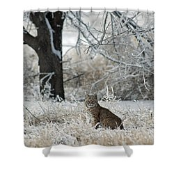 Bobcat And Heavy Frost Shower Curtain by Gary Langley
