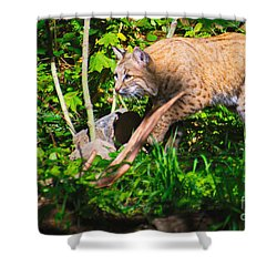 Bobcat At Water's Edge Shower Curtain