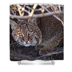 Bobcat Shower Curtain by Bruce J Robinson