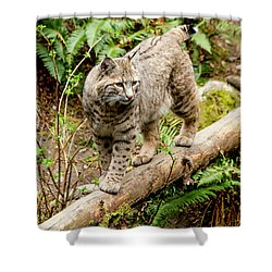 Bobcat In Forest Shower Curtain by Teri Virbickis