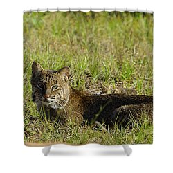 Bobcat In The Sun Shower Curtain