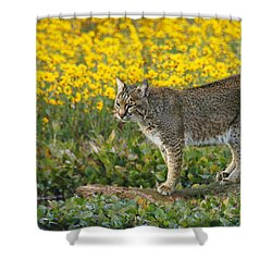 Bobcat In The Swamp Shower Curtain