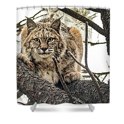 Bobcat In Winter Shower Curtain
